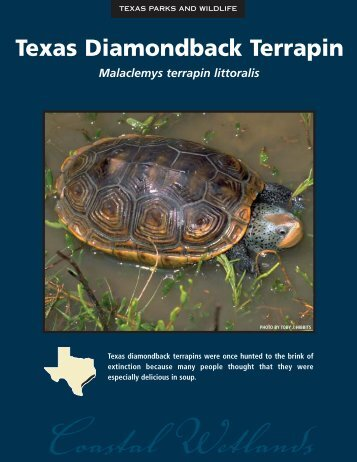 Texas Diamondback Terrapin - The State of Water