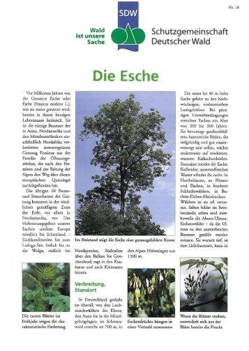 Esche - Schutzgemeinschaft Deutscher Wald