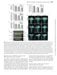 Male gametophyte-specific WRKY34 transcription factor mediates ... - Page 7