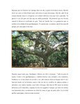 Alex Explora El Imposible - Rainforest Alliance - Page 4