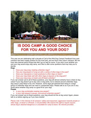 is dog camp a good choice for you - City Dog Country Dog Training