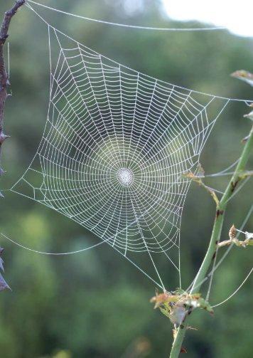 Web i teranyina - Institució Catalana d'Història Natural