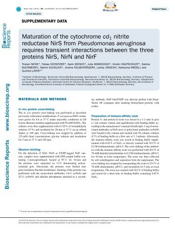 Maturation of the cytochrome cd1 nitrite reductase NirS from ...