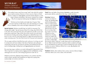 MUSKRAT - Fur Institute of Canada