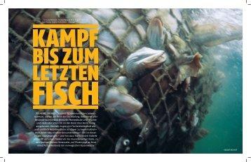 PDF zum Download - Medium Magazin