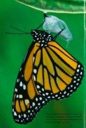 3846 Watchers of Butterflies - webapps8