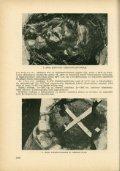 Adatok a mátraházi kísérleti mesterséges madárodu telepen észlelt - Page 5