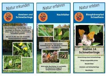 14 - Schmetterling - Schaafheim