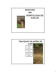 MORFOLOGIA DE SUELOS Descripción de perfiles de suelo