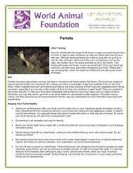 Ferrets - World Animal Foundation