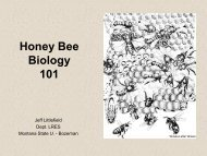 Honey Bee Biology 101