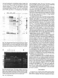 Genetic Variation in Fusarium oxysporum from Cyclamen - Page 5