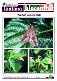 Hypena laceratalis - Weeds Australia
