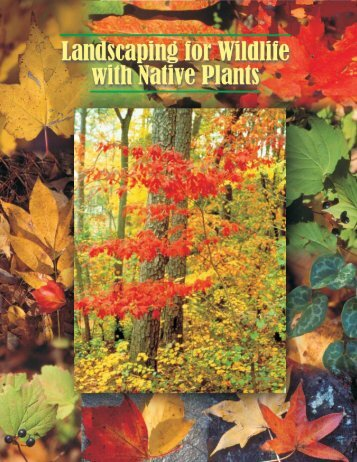 3. Landscaping for Wildlife with Native Plants - Watauga County ...