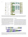 Identification, basic characterization and evolutionary - Labs.med ... - Page 6