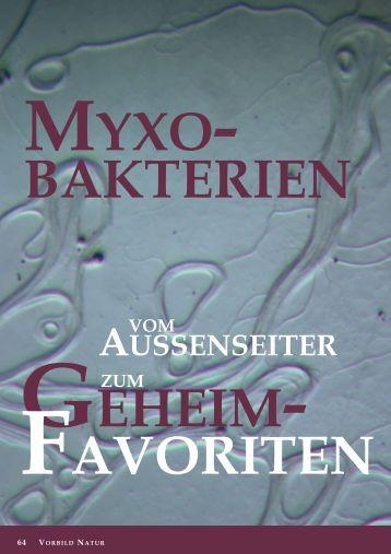 Myxobakterien sind Gram-negative Bakterien, die sich ... - DECHEMA