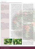 Myxobakterien sind Gram-negative Bakterien, die sich ... - DECHEMA - Seite 5