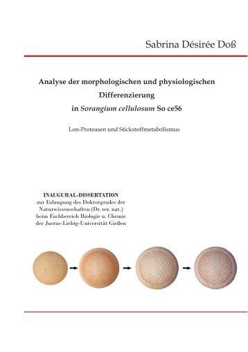 Analyse der morphologischen und physiologischen Differenzierung in