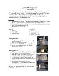 Agarose Electrophoresis