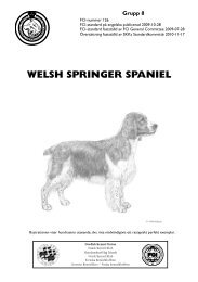 SKK-standard för Welsh Springer spaniel - Svenska Kennelklubben