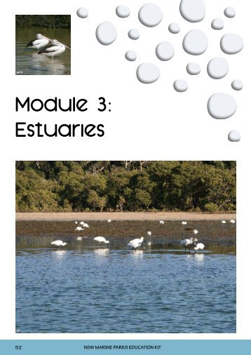 Module 3: Estuaries - Marine Parks Authority NSW