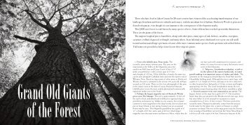 Grand Old Giants of the Forest - Hitchcock Woods Foundation