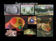 Eyes everywhere…