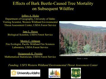 Effects of Bark Beetle-Caused Tree Mortality on ... - beetles.mt.gov