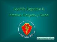 Digestivo II - FMV
