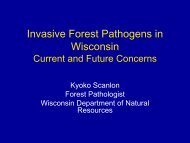 Invasive Forest Pathogens in Wisconsin Current and Future Concerns