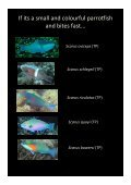 Colour guide of Palau herbivores - Marine Spatial Ecology Lab - Page 5