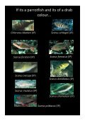 Colour guide of Palau herbivores - Marine Spatial Ecology Lab - Page 6