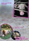Kein Schwein gehabt - Starke Pfoten - Seite 6