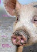 Kein Schwein gehabt - Starke Pfoten - Seite 7