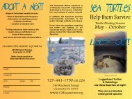 sea turtles - City of Clearwater