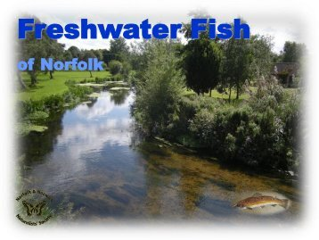 url?sa=t&source=web&cd=3&ved=0CCQQFjAC&url=http://www.nnns.org.uk/sites/nnns.org.uk/files/imce/user11/speciesguides/Fish