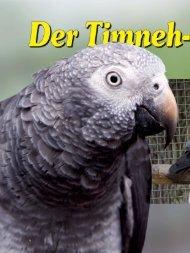Der Timneh-Graupapagei Teil 1 - African-Parrots - Alles über ...