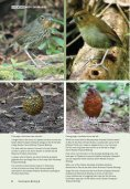 Antpitta Paradise: A 2010 Update - Neotropical Bird Club - Page 6