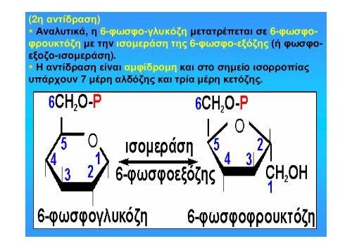 Διάμεσος Μεταβολισμός Υδατανθράκων