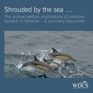 Shrouded by the sea … - Whale and Dolphin Conservation Society