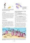 Fett-kunskap - Page 6