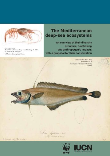 The Mediterranean deep-sea ecosystems: An overview of ... - WWF