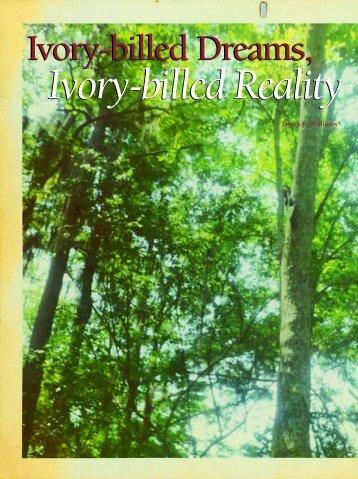 Ivory-billed Dreams, - BirdViewing