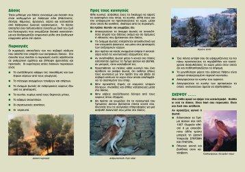 Κυνηγοί και δάσος