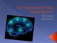 Optogenetics: Stroke Rehabilitation