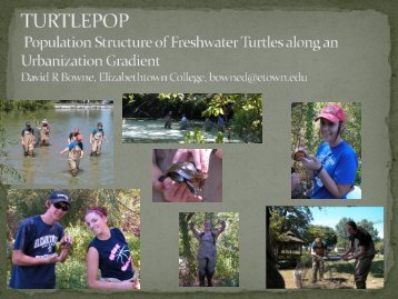EREN Turtle Population Study Project at ESA 2011, Austin TX by ...
