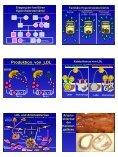 Arnold von Eckardstein Lipoprotein-Stoffwechsel Lipoproteine ... - Seite 5