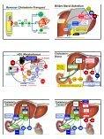 Arnold von Eckardstein Lipoprotein-Stoffwechsel Lipoproteine ... - Seite 7