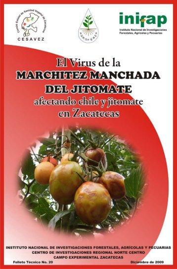 el virus de la marchitez manchada del jitomate ... - INIFAP Zacatecas