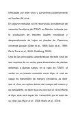 el virus de la marchitez manchada del jitomate ... - INIFAP Zacatecas - Page 7